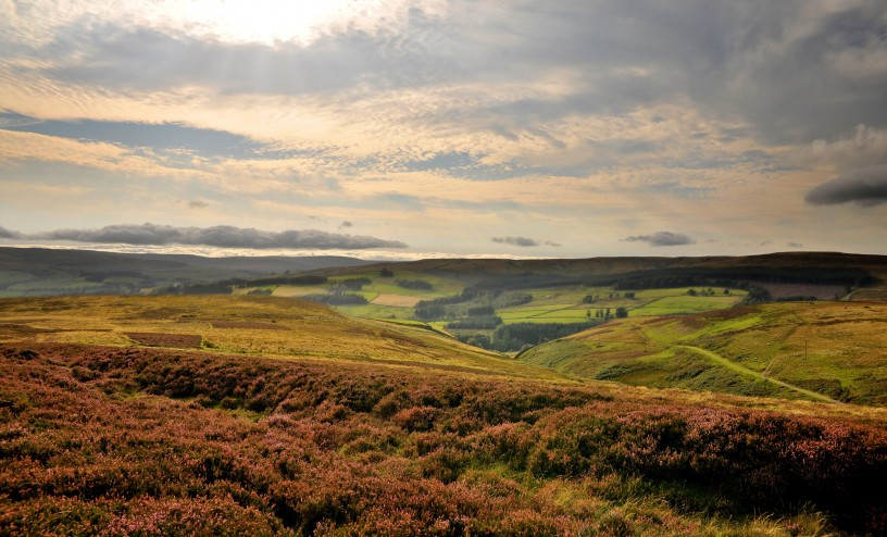 Moorland in Weardale, North Pennines Area of Outstanding Natural Beauty
